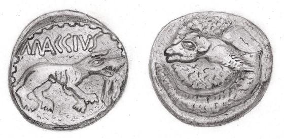 minca maccius 506